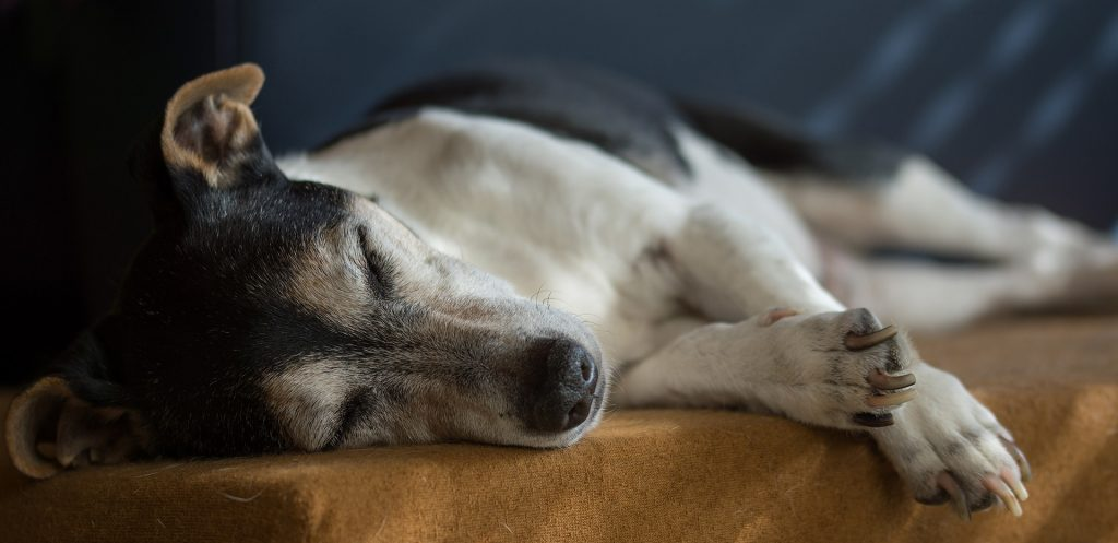 Post-surgery recovery for your pet